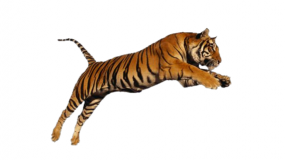 """Child to Child – """"A Tiger by the Tail""""  thumbnail"""